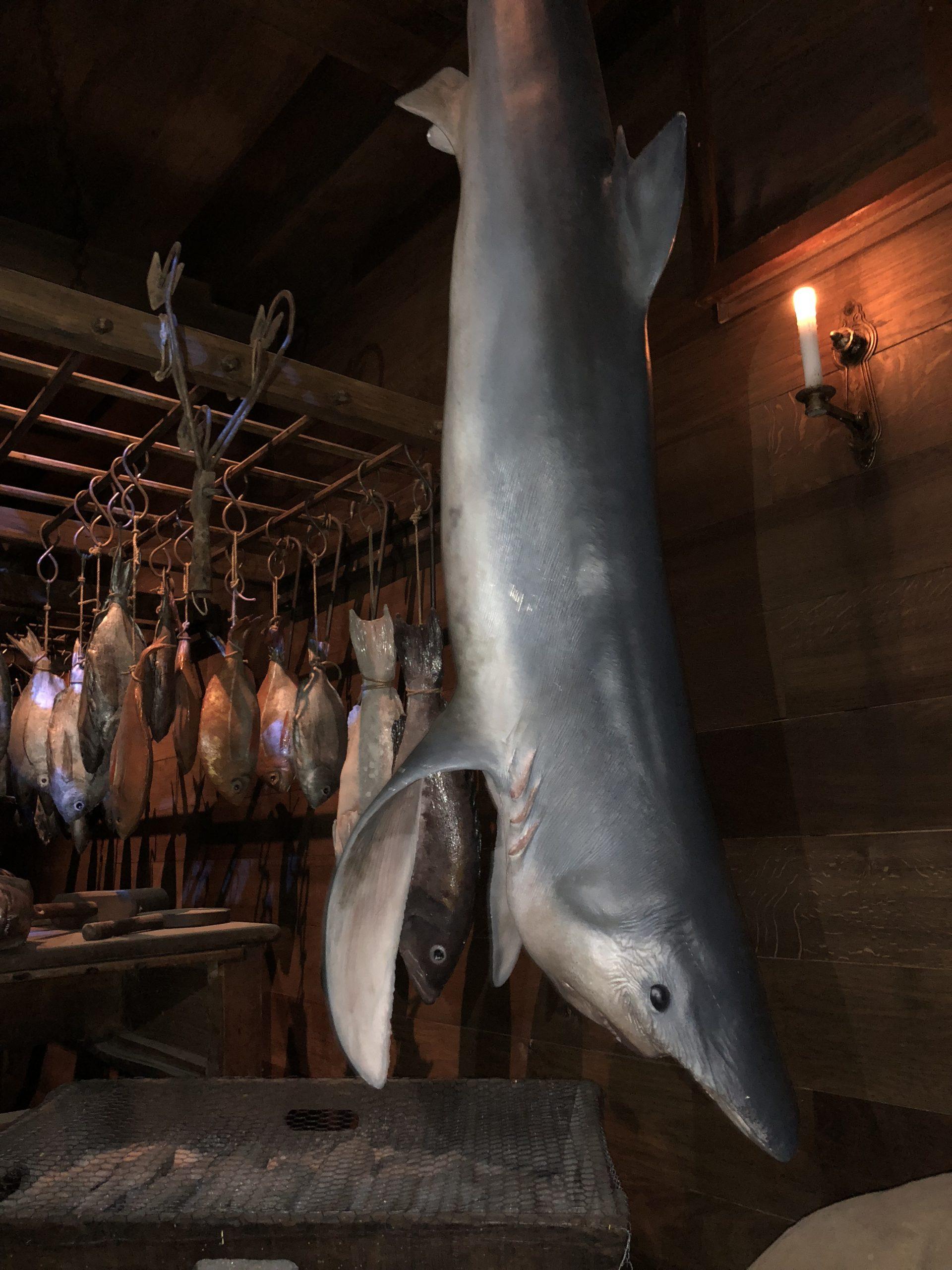 faux requin d'après moulage d'un vrai,accessoires décor puy du fou