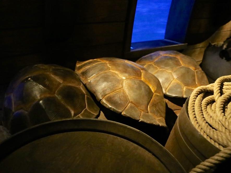 fausses carapaces de tortues des mers, en résine peinte, accessoires décor bateau puy du fou